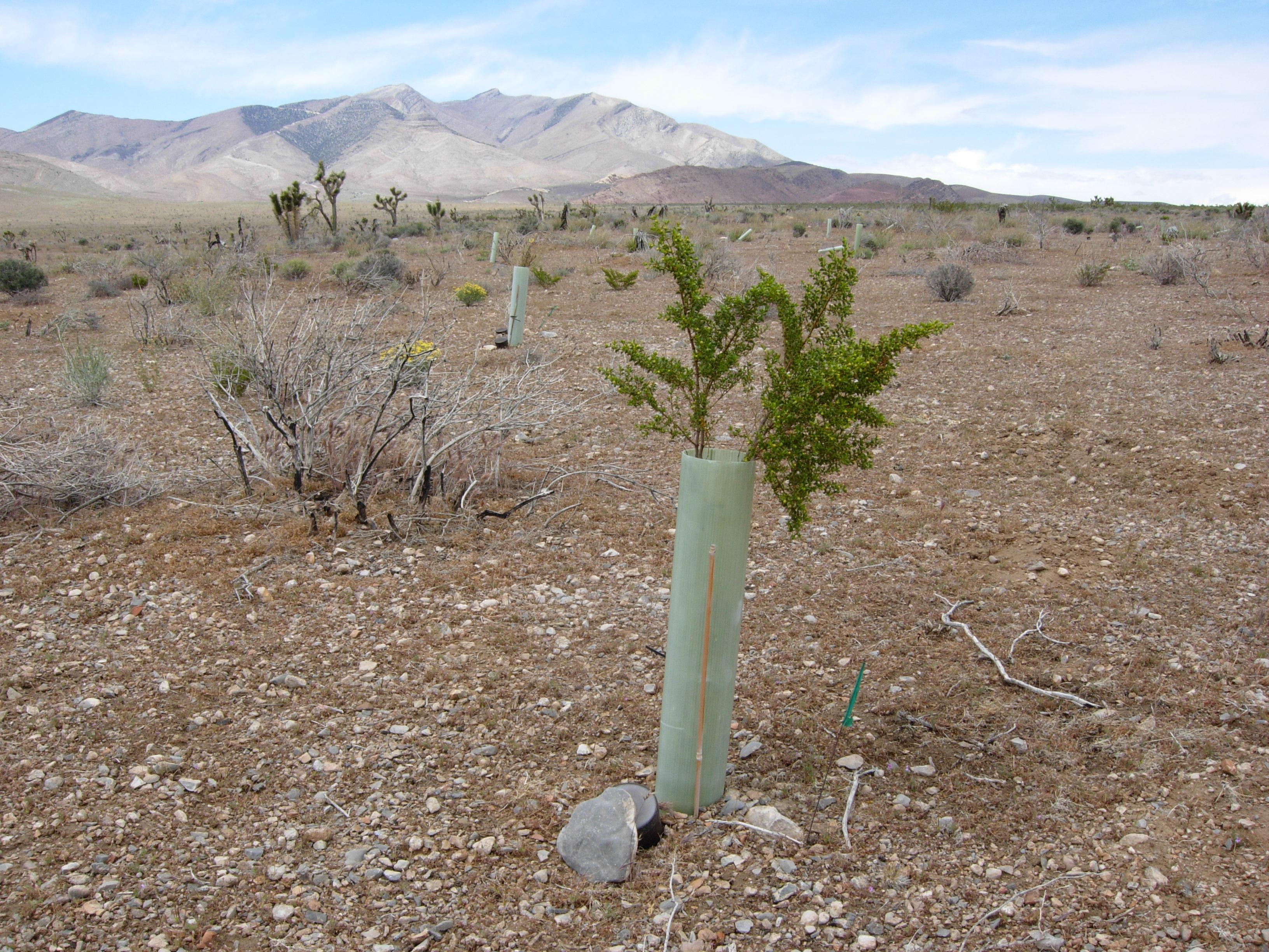 Abella Nevada desert