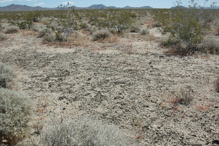 A patch of desert with an example of biological soil crusts