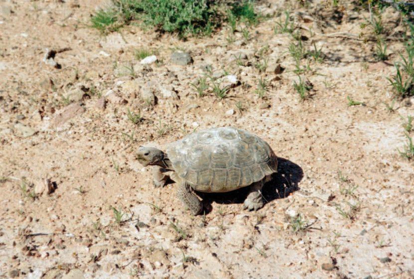 Tortoise 2014 By RJ Abella